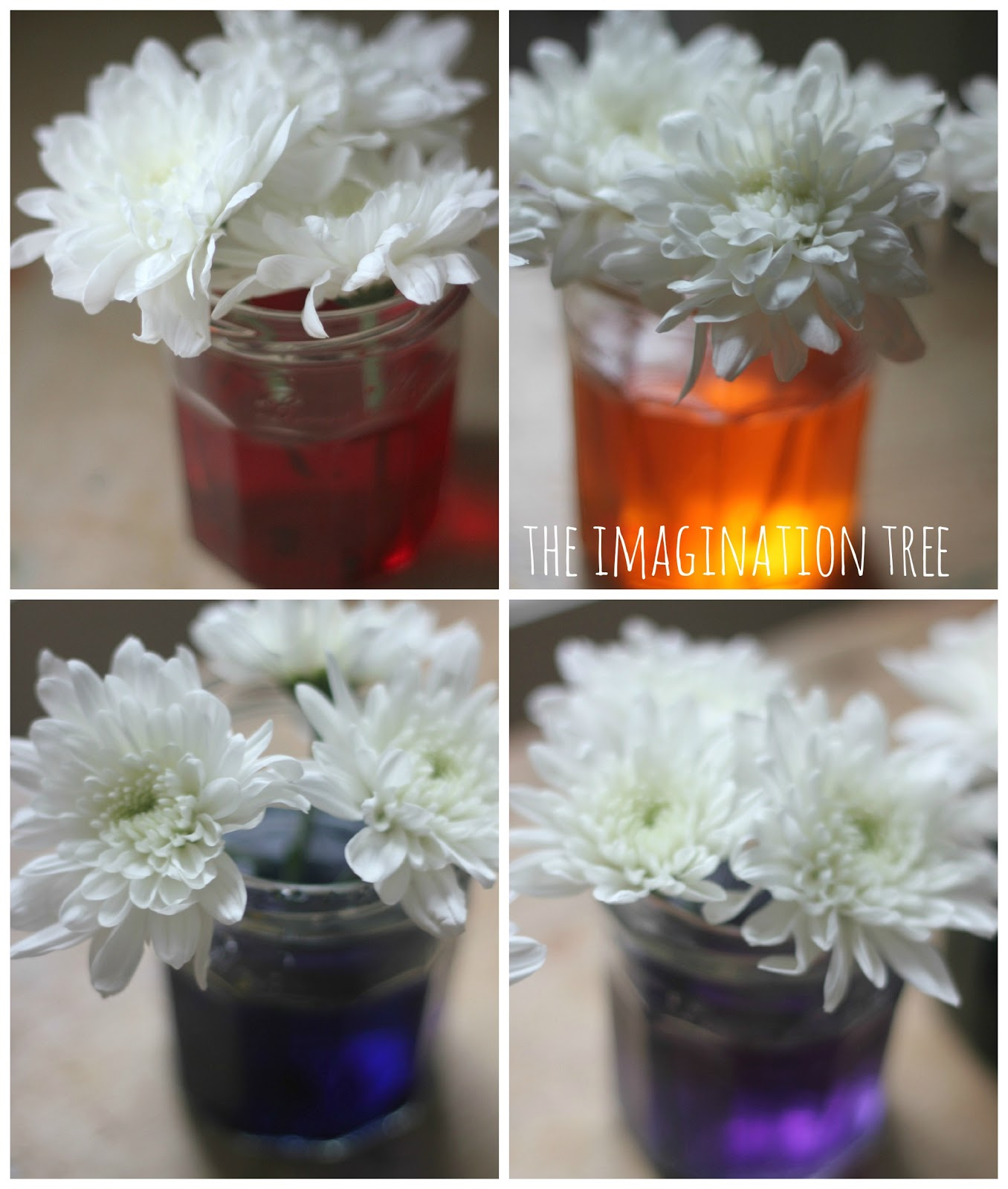 Dyed Flowers Science Experiment The Imagination Tree Stem On Pinterest Projects Fair And Stems