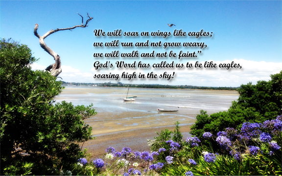 We Soar Like Eagle Love Quotes