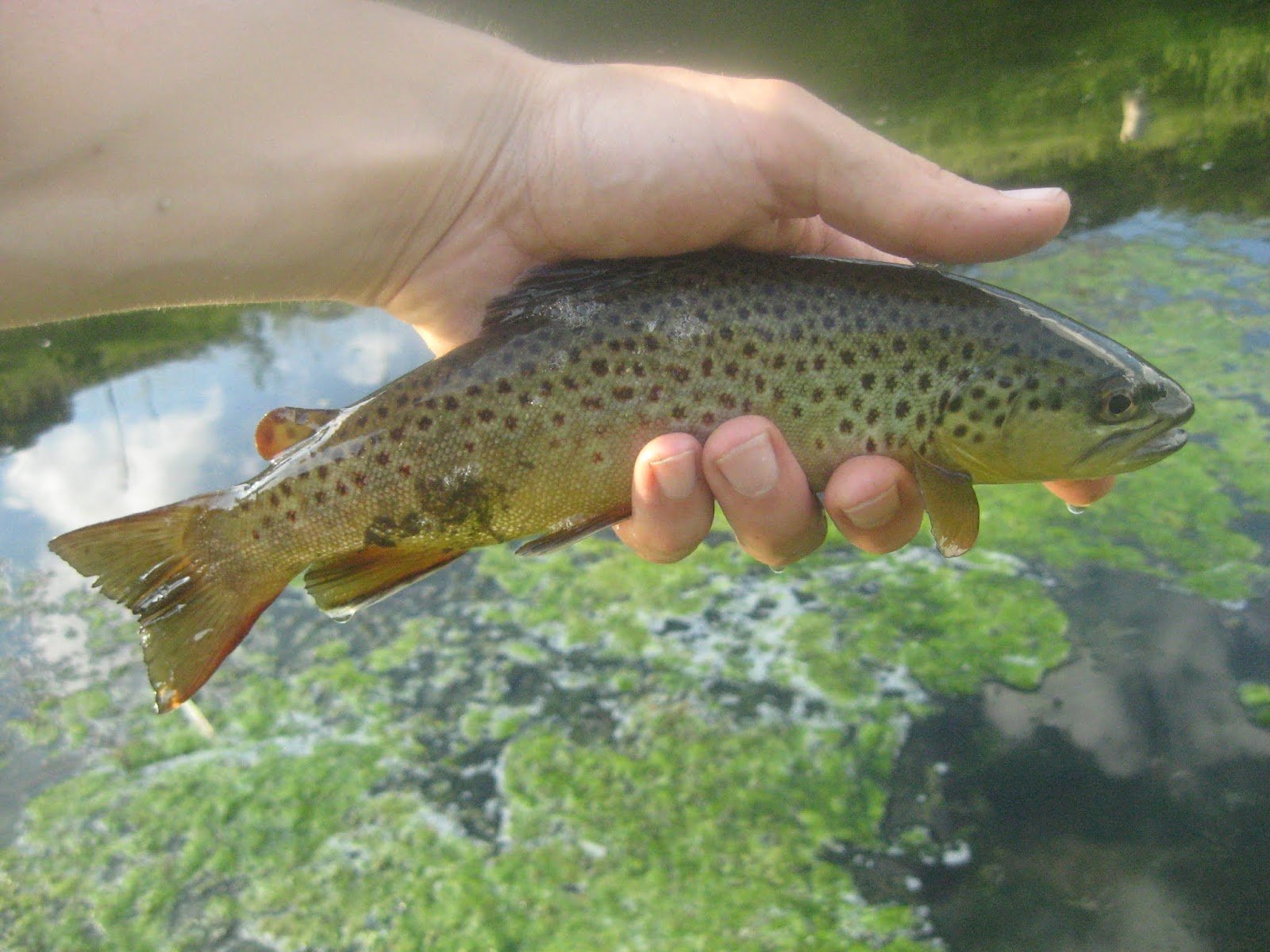 Minnesota Driftless Fly Fishing: May 2018