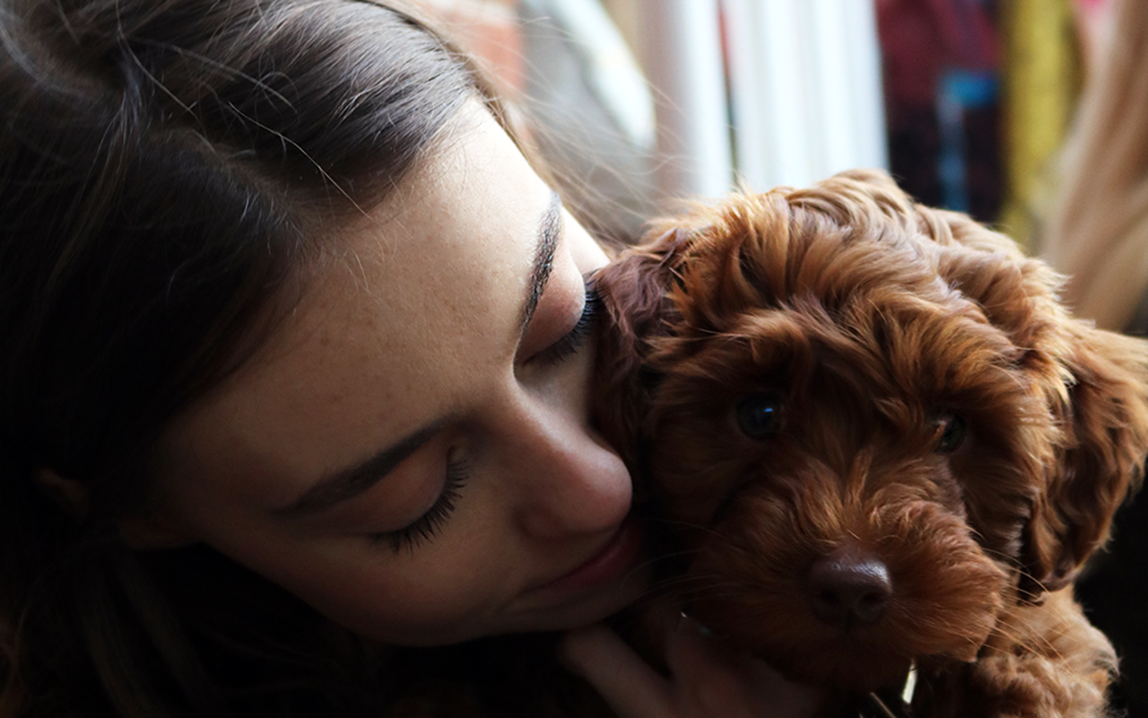 labradoodle puppy red ginger australian lab labrador red head training blogger beauty blog fashion grace mandeville