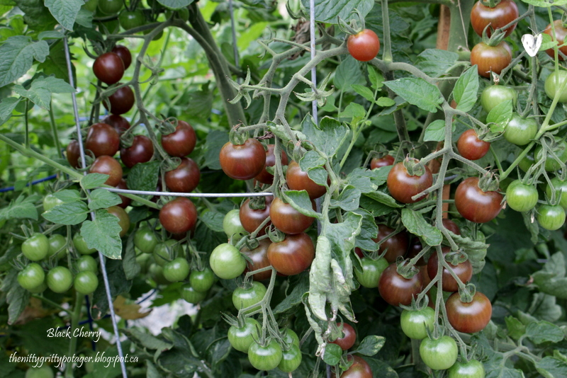 The Nitty Gritty Potager: Tanja's Top Twelve Heirloom ... Black Tomato Plants