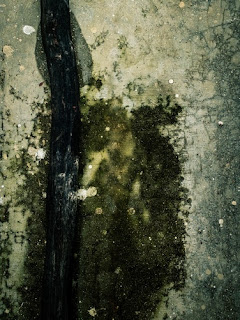A surface covered in mold