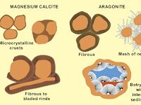 Lingkungan Diagenesis Batuan Karbonat : Zona Marine
