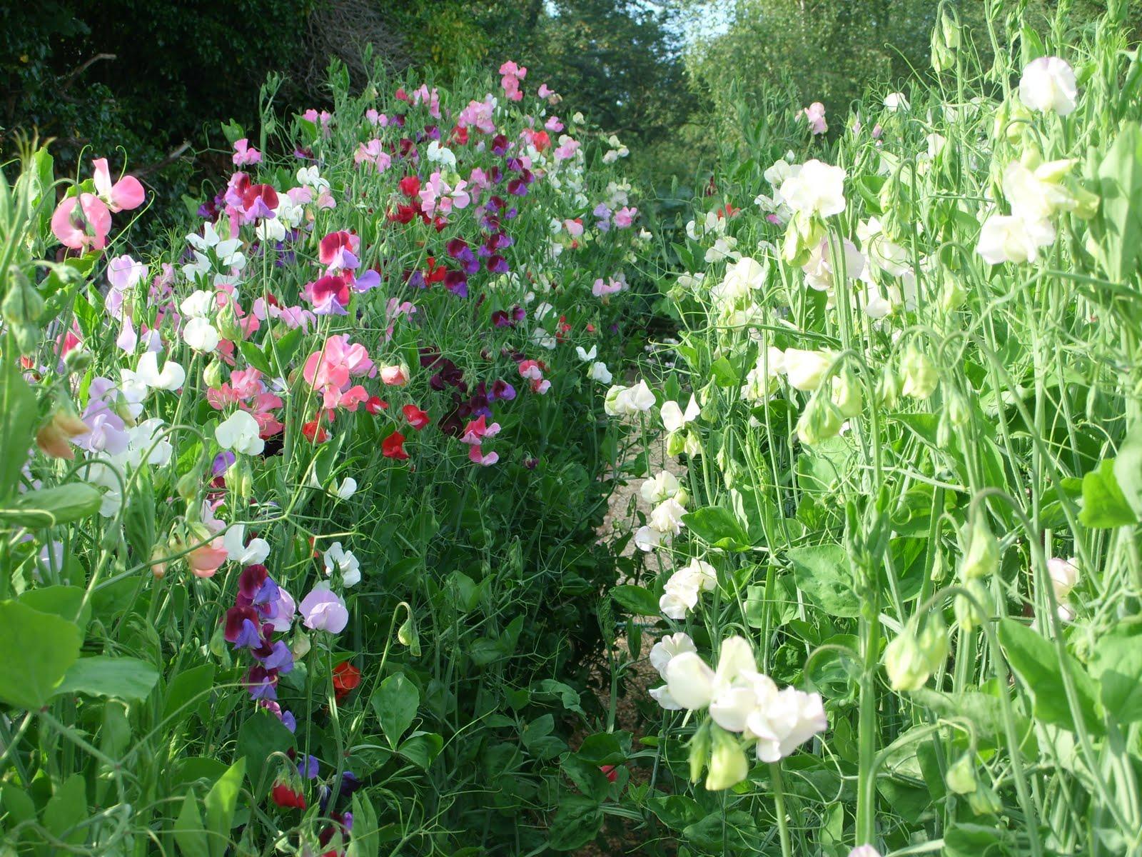 Choosing a plot for your cutting patch – Cut Flower Garden Plan