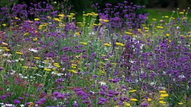 Creación de praderas ornamentales estacionales y perennes. Nuevo curso en el Botánico de Madrid