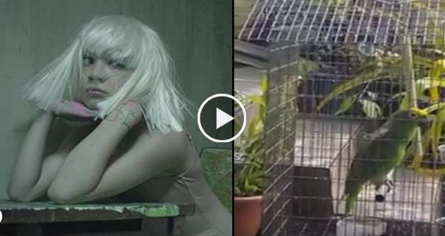"Watch This Talented Parrot Sings Sia's ""Chandelier"" Better Than You Do."
