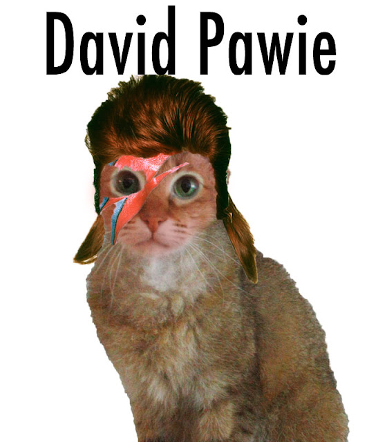 david pawie david bowie as a cat funny photoshop