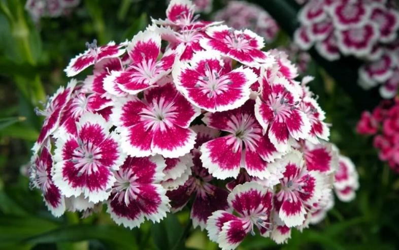 ảnh đẹp về các loài hoa