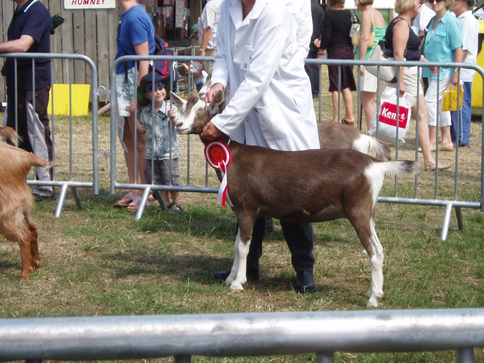 ellie u0027s dairy the finest goat milk from kent