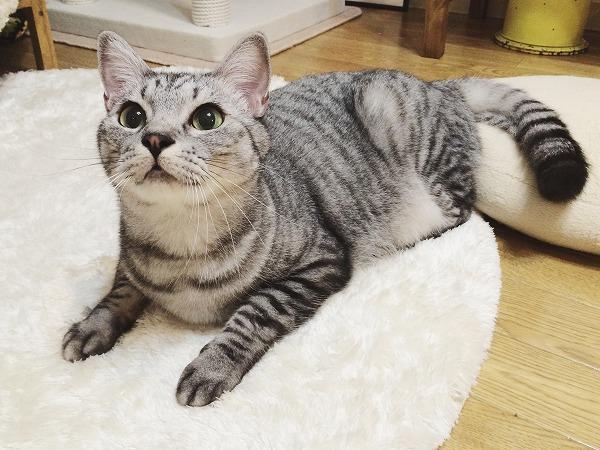 イケメン美猫ちゃん