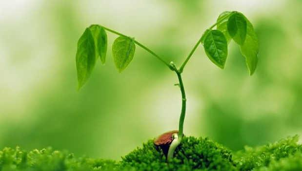 Pertumbuhan Primer dan Sekunder