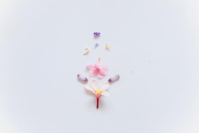 minimalism flower photo
