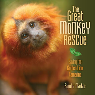 Great Monkey Rescue by Sandra Markle book cover