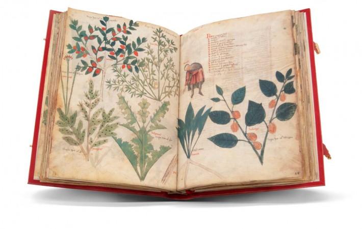 Resultado de imagen de Herbarios de Dioscórides