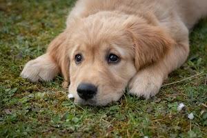 Giữ chó an toàn trong mùa thu