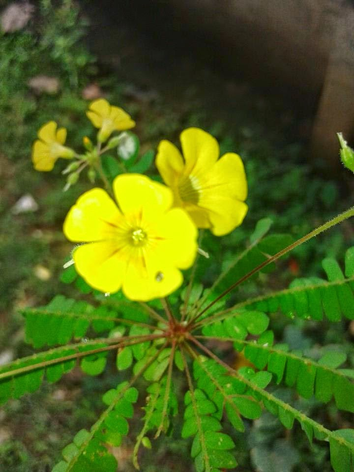 Essay about theyyam in malayalam language