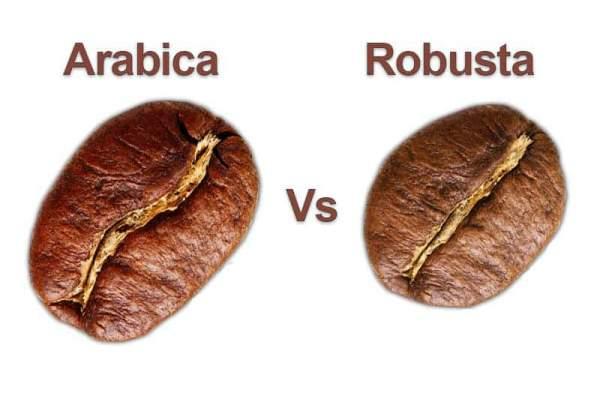 Perbedaan kopi arabika vs robusta