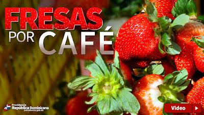 VIDEO: Fresas por café