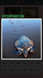 на мокром песке остаются отпечатки от ползущей черепахи