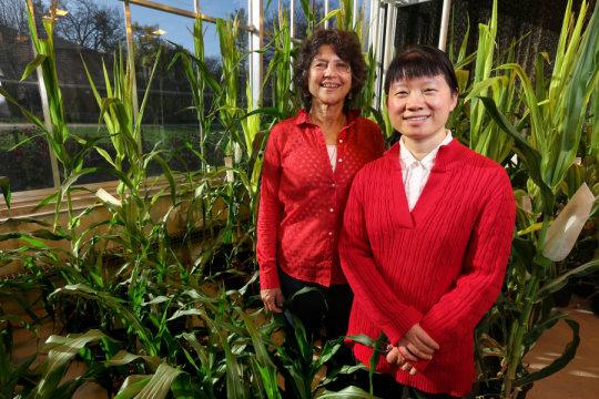 دراسة تتوصل لـ«چين يتيم» له القدرة على مُضاعفة المحتوى البروتيني في المحاصيل الزراعية