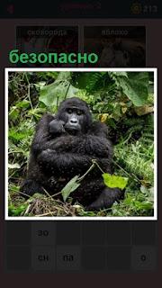 651 слов сидит горилла с детенышем, которому безопасно 2 уровень