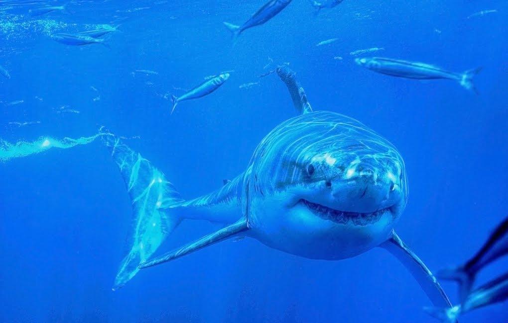 Australia: 12 squali attaccano un giovane mentre pescava sulla spiaggia