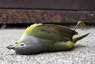 Obat Burung Penyakit Ayan Dan Kisaran Harga Terbarunya Saat Ini