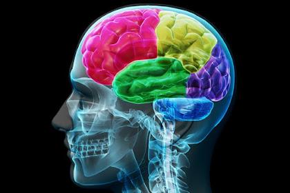 5 cara jitu memperoleh otak yang cerdas