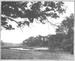 Drawing of one of the lakes on the estate