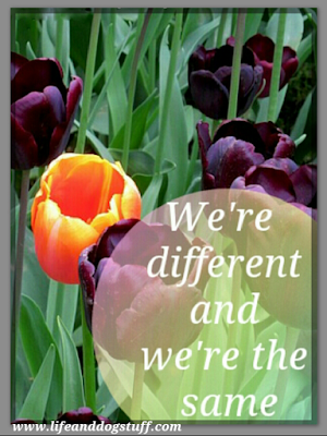 We are Different But The Same