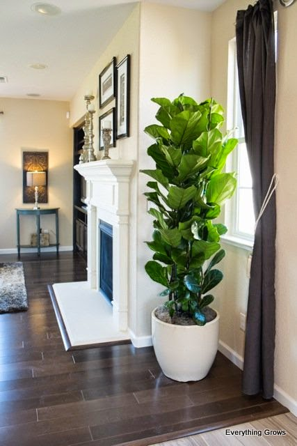 Everything Grows Living Plants In Model Homes