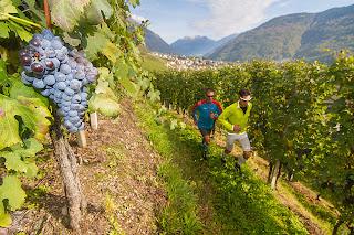Valtellina Wine Trail 5 novembre Sondrio