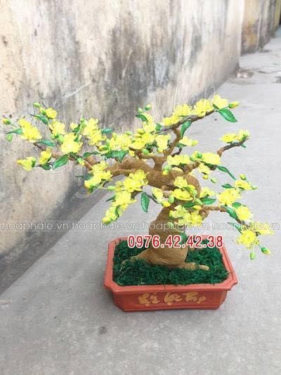 Goc bonsai mai dao tai Bui Ngoc Duong
