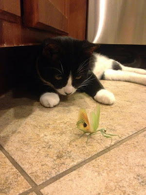 Imagenes divertidas: gatito acechando un gran insecto