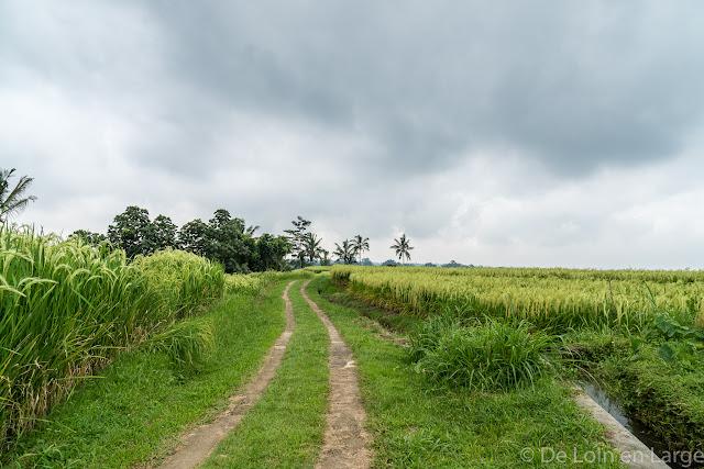 Rizières de Jatiluwih - Bali