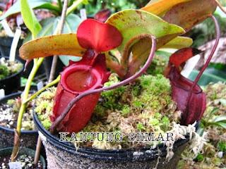 Jenis Flora Asiatis