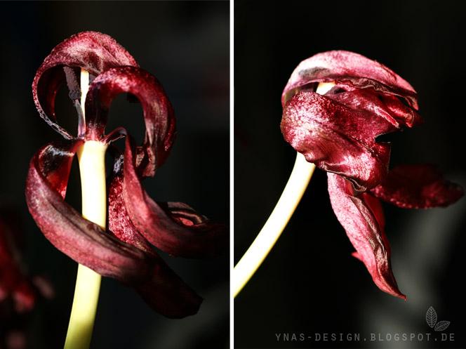 Ynas Design Blog, Fotografie, Tulpen