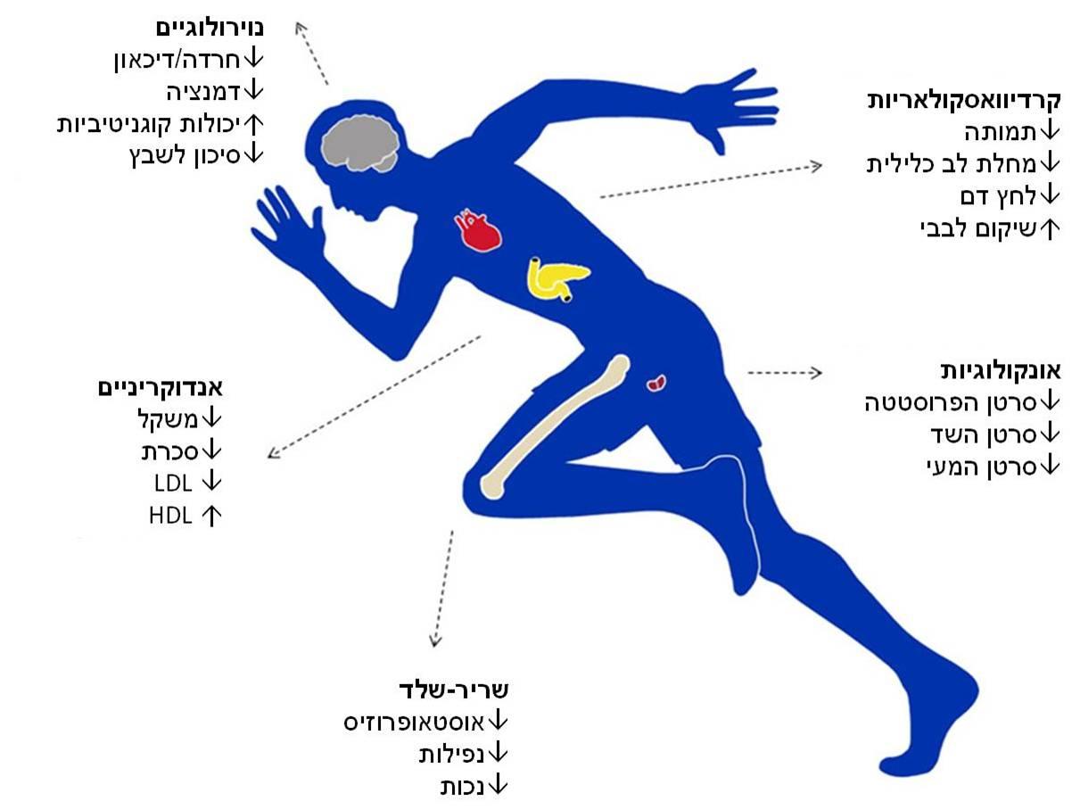 תוצאת תמונה עבור פעילות גופנית