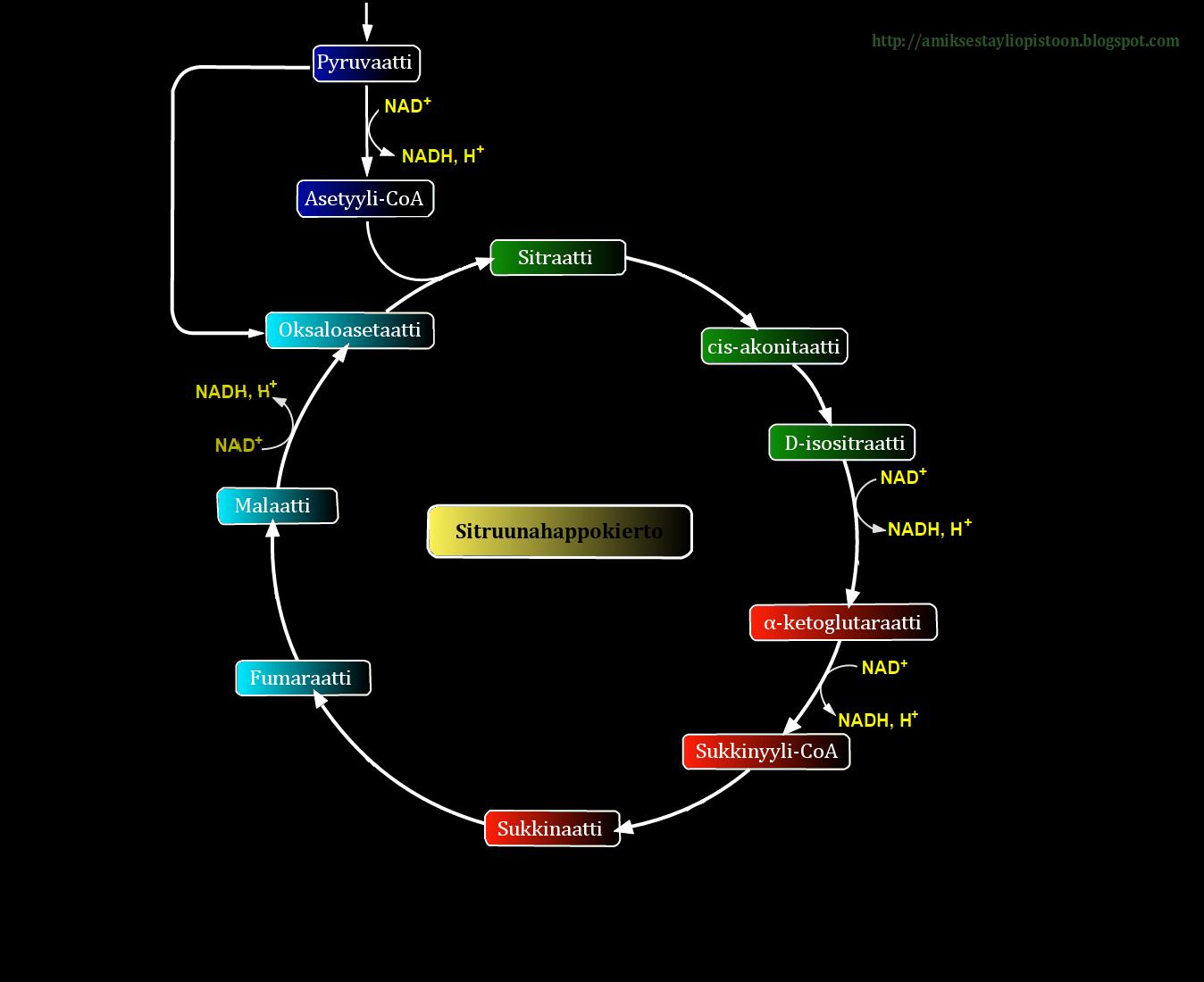 Adenosiinidifosfaatti