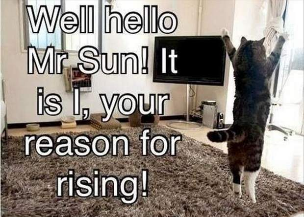 30 Funny animal captions - part 47, animal picture with sayings, captioned animal pictures, meme cat