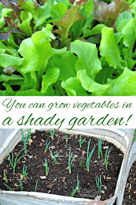 You can grow vegetables in a shady garden with a little creativity, and using light to your advantage.