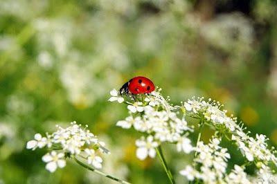 Puisi Dengung Kumbang Kepada Bunga