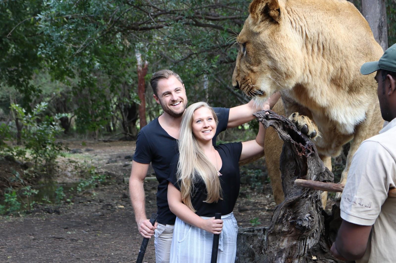 Casela Lions