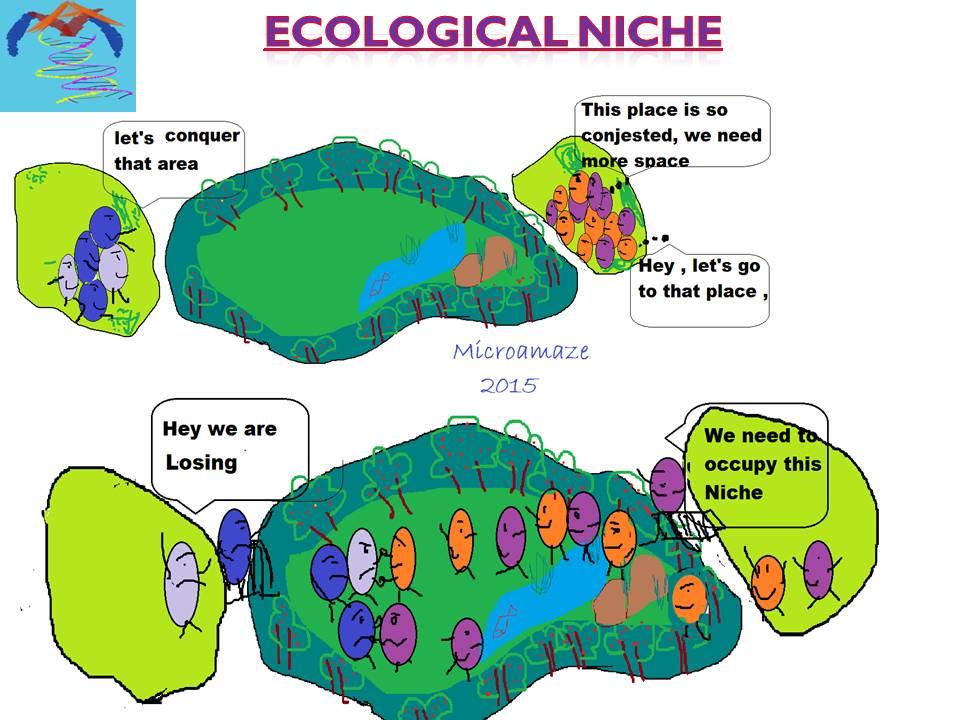 Microamaze Ecological Niche