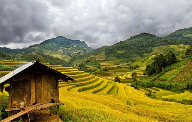 Những thửa ruộng bậc thang xuất hiện ở hầu hết các xã và thị trấn trên địa bàn huyện Hoàng Su Phì. Tuy nhiên, tập trung nhiều nhất vẫn là ở Bản Luốc, Bản Phùng, Sán Sả Hồ, Nậm Ty, Hồ Thầu, Thông Nguyên với tổng diện tích lên tới 765ha.
