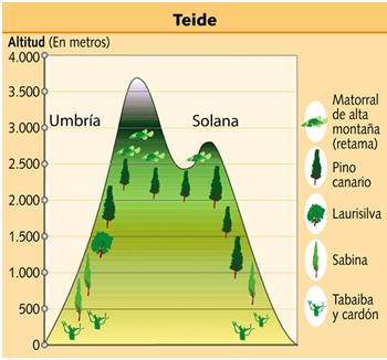Blog de geograf a profesor pedro o a paisaje vegetal de for Pisos de vegetacion canarias