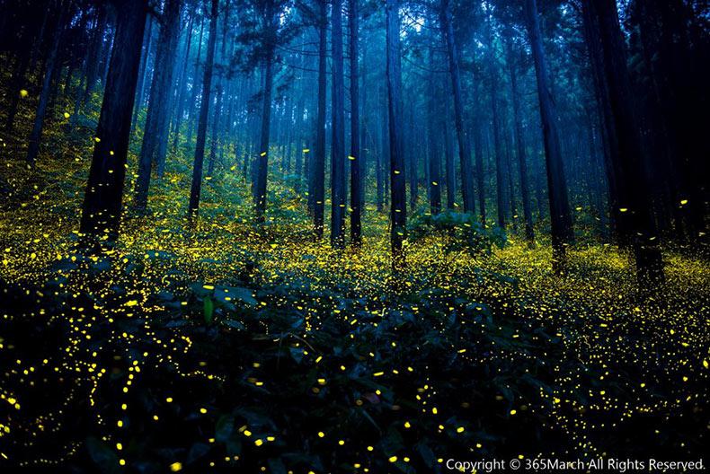 Las mágicas fotografías de luciérnagas del verano 2016 de Japón