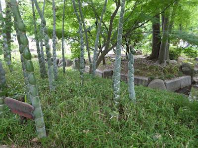 城北菖蒲園の亀甲竹