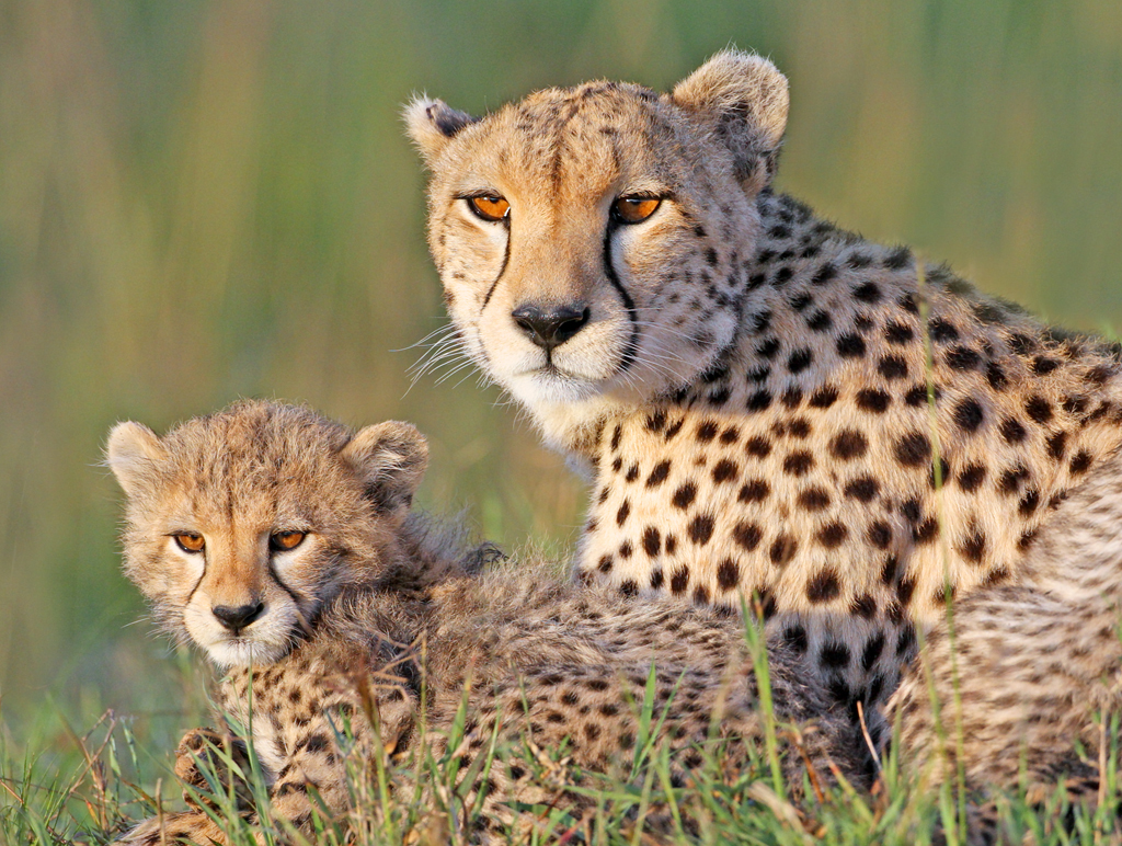 Top Flight Nature Photography: Photographing African