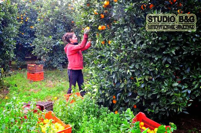 Η μείωση της παραγωγής έφερε την αύξηση της τιμής στα πορτοκάλια
